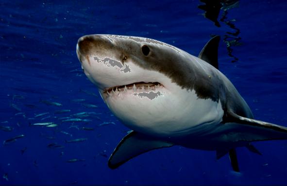 水中的动物图片图片说明